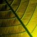 Blätterwelten