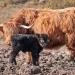 Highlandrinder