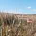 Mein Plot Land auf Islay - FoL