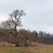 Alter Baum.